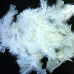 Plumes blanches 10 15 cm