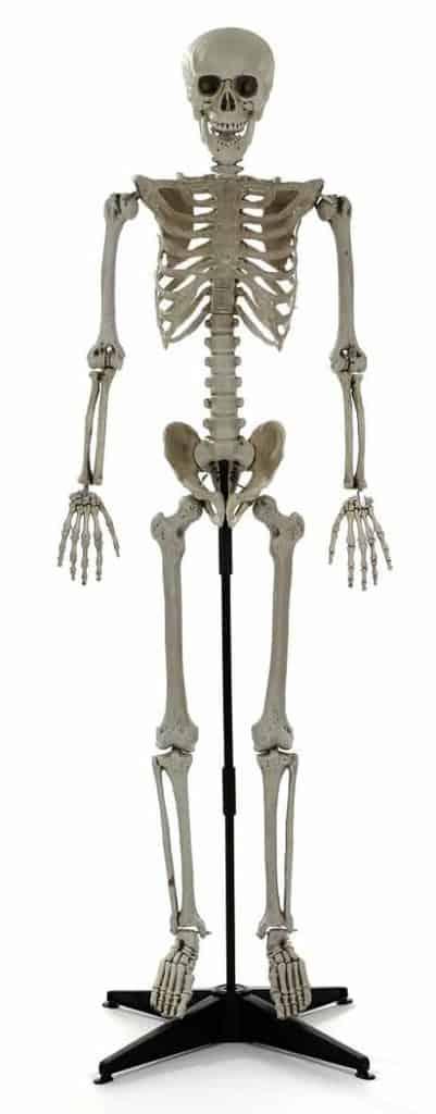 Squelette sur pied avec socle