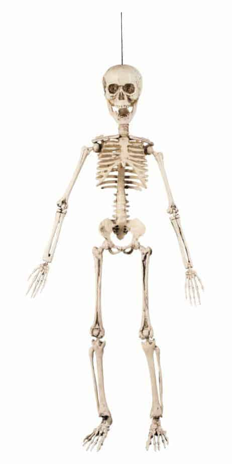 Squelette 50 cm Amovilble