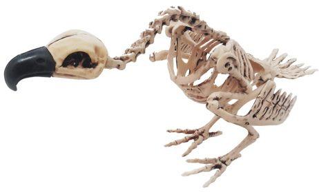 Vautour squelette 44 cm